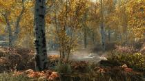 Skyrimspecialeditionfallforest 1465779409